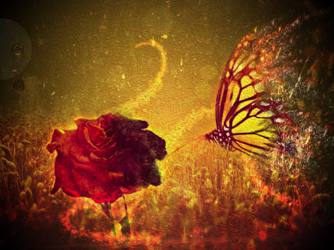 Rose&Butterfly