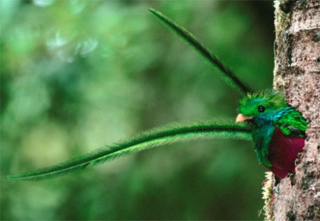 quetzal-feathers