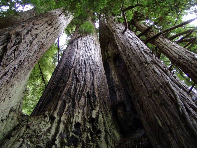redwood-national-park