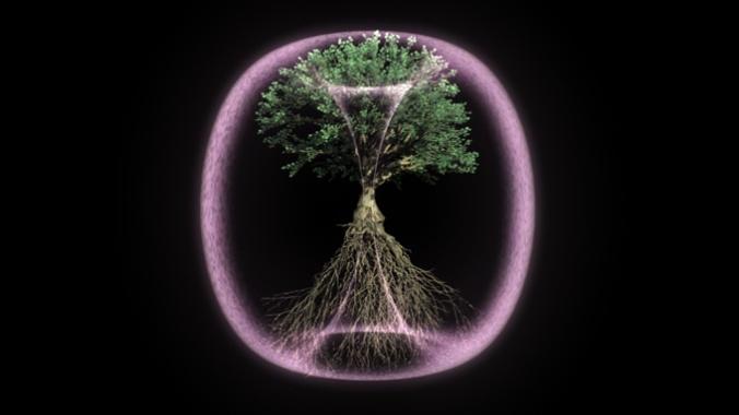Torus Tree