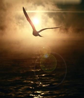 birdOverOcean