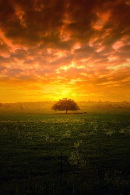 Tree New Dawn