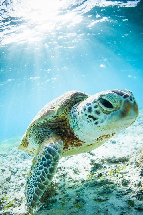 Mother Earth Tortuga